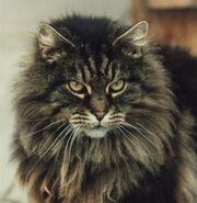 F7323a688c97924b189f7f2f8fd6916d--lion-cat-cat-cat