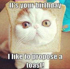 image happy birthday cat meme 10 jpg animal jam clans wiki