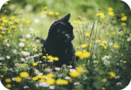 Medicine Cat Apprentice Image