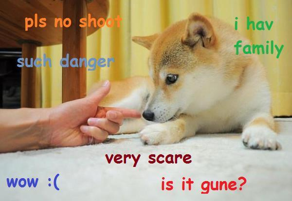 latest?cb=20170316174624 image doge meme shot (1) jpg animal jam clans wiki fandom