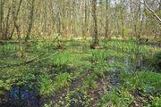 Swamp@