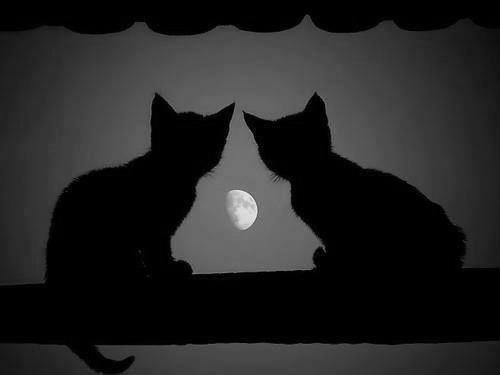 Dem darker ship kittis