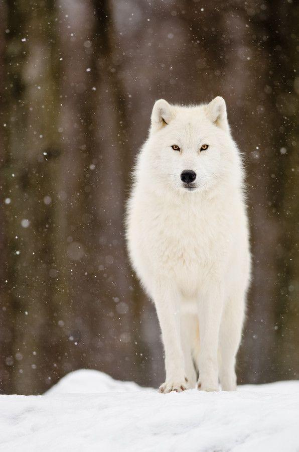 Wolf Blitzer - Wikipedia