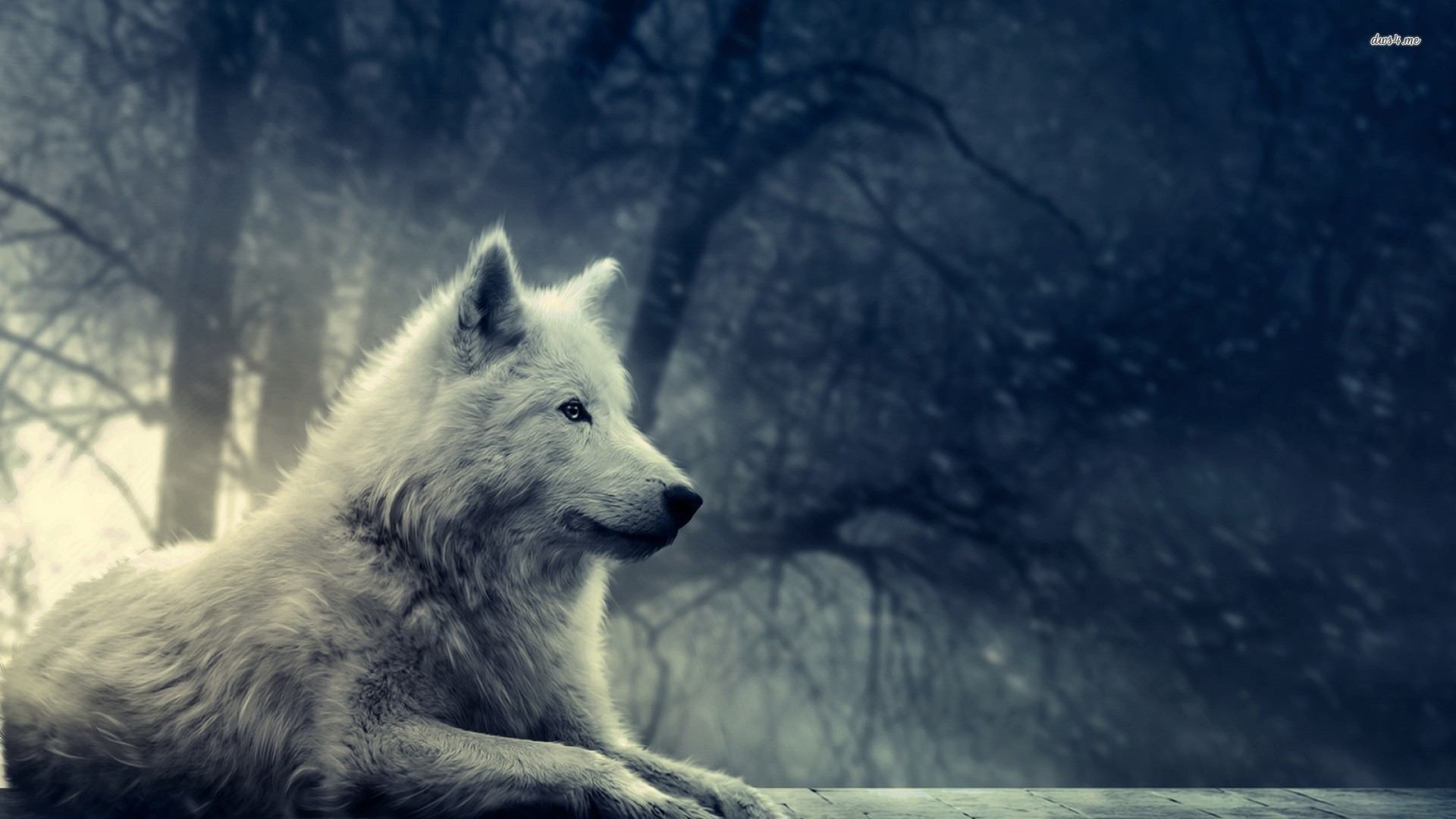 Gray Wolf Howling Wallpaper 3