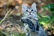 Cat-Cat Guide-An adorable young kitten playing outside