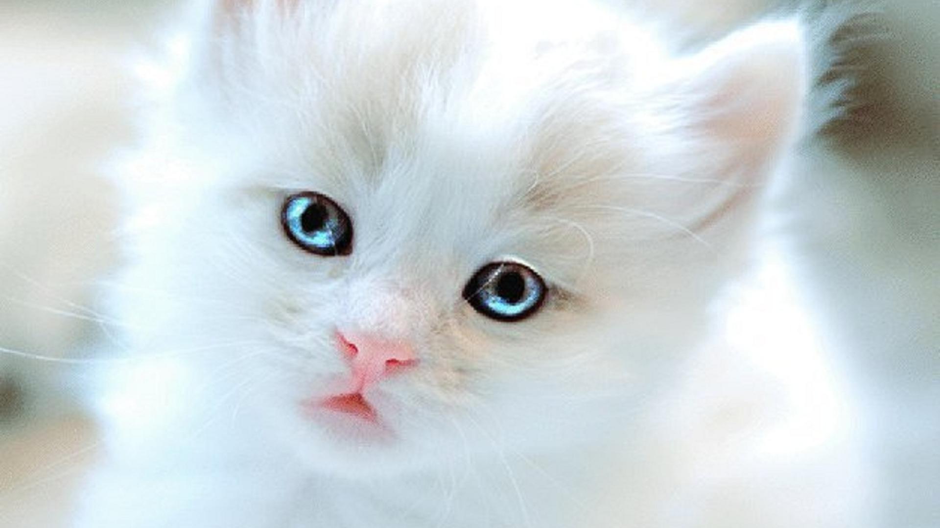Image Kitten 1 E E Jpg Animal Jam Clans Wiki Fandom Powered By