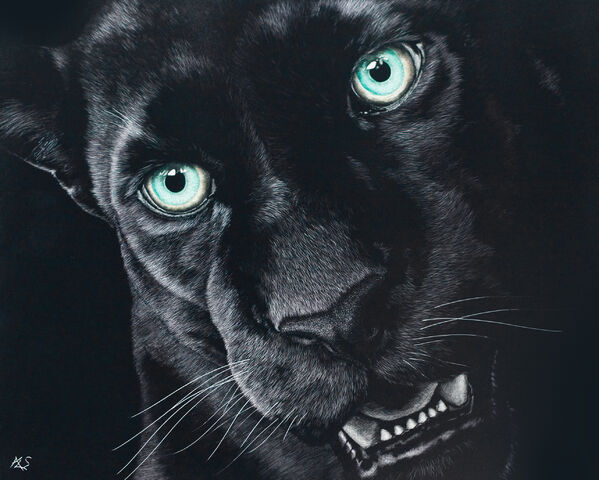 File:Black Jaguar Animal Pictures 39
