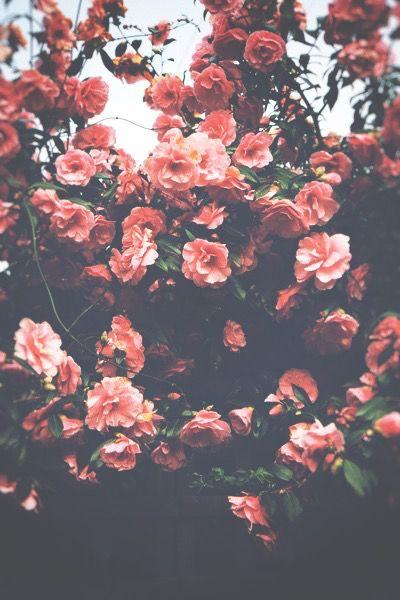 Flower Iphone Wallpaper Tumblr Hd