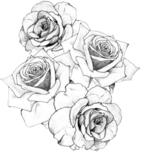 STumblr static black white roses tattoo