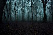 WhisperingForest