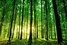 Green yellow forest