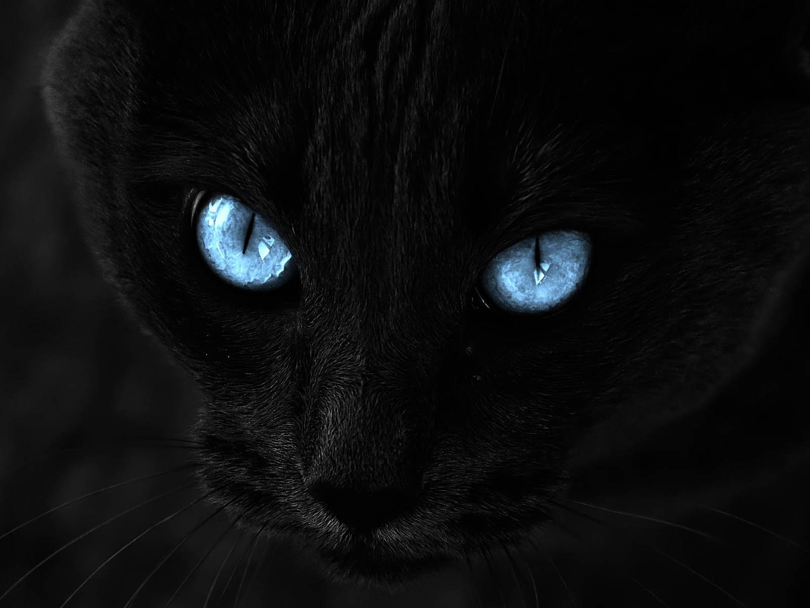Image Black Cat With Blue Eyes Hd Wallpaper Desktop Jpg Animal