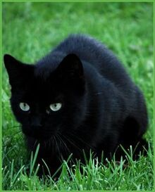 Cute black cats with green eyes