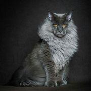 369c3a22b2efb180d1f7429cbc10daea--lion-cat-a-lion