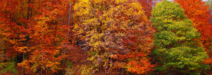 Fall-Color-Tours-Header