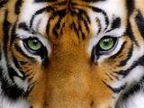 The Forgotten Myths (LionClan, TigerClan, LeopardClan)