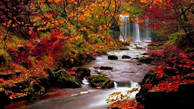 Fall-colors-5