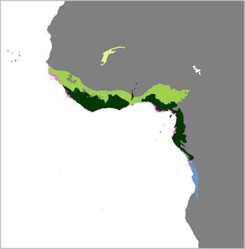 Trichechus senegalensis