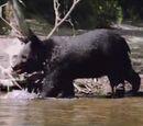 The Bear (Milo and Otis)