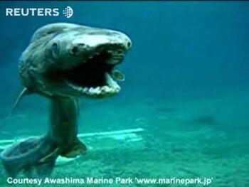 Rare-shark