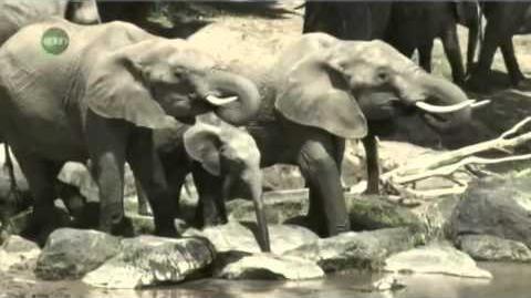 Animal Armageddon Next Extinction Episode 8