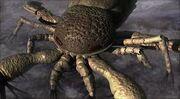 Pterygotus animal armageddon