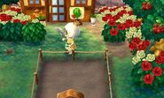 Baarbara ACNL Moving In