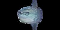 NH-Ocean sunfish