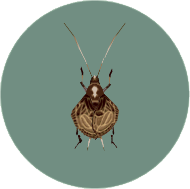 動森-鈴蟲