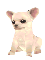 Chihuahuamodeldlccf