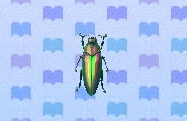 Jewel beetle encyclopedia (New Leaf)