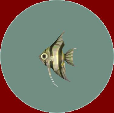 動森-神仙魚