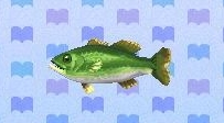 Black bass encyclopedia (New Leaf)