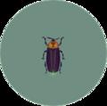 Firefly (City Folk)