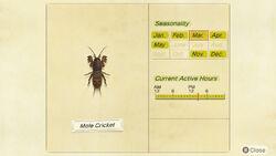 NH-encyclopedia-Mole cricket