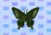 Peacock butterfly encyclopedia (New Leaf)