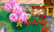 CherryBlossomNL1