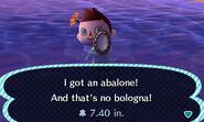 HNI 0007 abalone