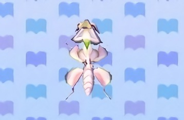 Orchid Mantis Catching Tips The Bell Tree Animal Crossing Forums