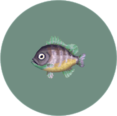 Bluegill (City Folk)
