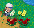 Flowersac