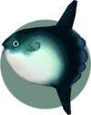 Ocean Sunfish (City Folk)