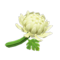Crisantemo blanco (New Horizons)