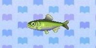 Sweetfish encyclopedia (New Leaf)