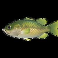Black Bass Animal Crossing Wiki Fandom