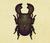 Escarabajo ciervo gigante NH