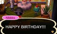 Nibbles birthday