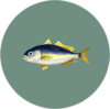 Horse Mackerel (City Folk)