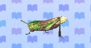 Migratory locust encyclopedia (New Leaf)
