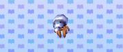 Hermit crab